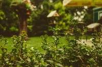 jardin top duo idees deco astuces